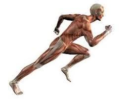equilibrio-muscular-compensacion-3