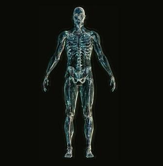 osteopatia-pubis-4