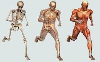 prevencion-fisioterapia-3
